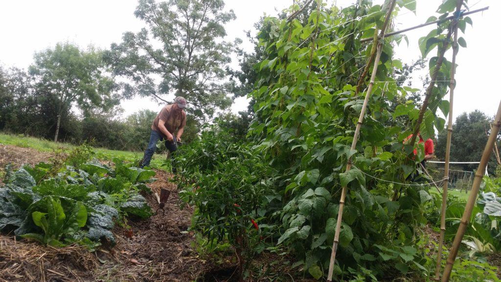 Le Temps des Cerises Le premier Automne du jardin partagé